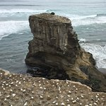 Muriwai Beach with Gannet colonies