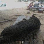 Marie's Beach Shack