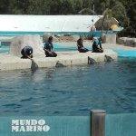 Espectaculo de orcas y delfines