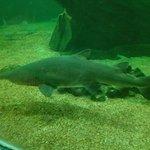Acuario de tiburones