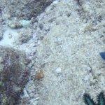 Strange starfish