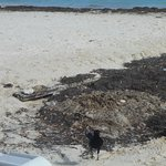 FILTHY beach.POOR Management