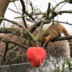 Valentine's Day enrichment for coaties.