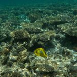 snorkeling over the reef