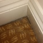 Filthy carpet and skirting