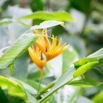 Photo of Diamond Botanical Gardens