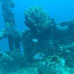 Photo de Palm Beach Divers