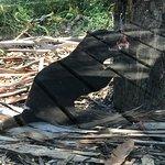 Photo of Tasmanian Devil Unzoo