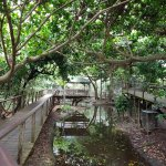 Photo de Wildlife Habitat Port Douglas