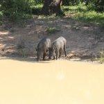 Foto de Yala National Park