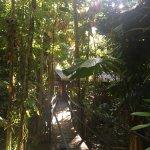 Foto de Daintree Wilderness Lodge