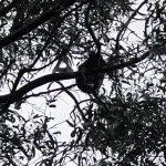 Photo of Kennet River Koala Walk