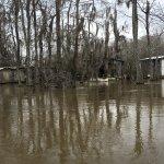 Dr. Wagner's Honey Island Swamp Tours Foto