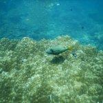 Photo de Hidden Depths Diving