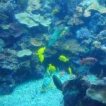 Photo de Maui Ocean Center
