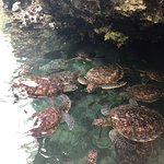 Mnarani Marine Turtles Conservation Pond Foto
