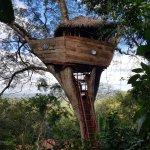 Foto de The Treehouse