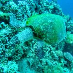 Photo de Ocean College Dive Centre