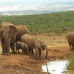 Foto de Parque nacional de los Elefantes de Addo