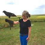 Getting to handle a jackal buzzard