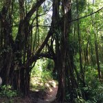 Manoa Falls Foto