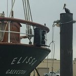 Photo of 1877 Tall Ship ELISSA