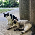 If you like cats then you'll love this hotel. So many friendly soft cats to pet! Friendly owner.