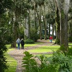 Moss-draped trees along walking path