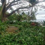 Photo de Hawaii Tropical Botanical Garden