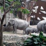 Elephant Arena