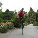 Christchurch Botanic Gardens - Rose Garden