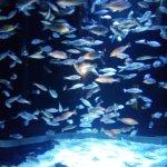 Photo of Sharjah Aquarium