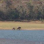Periyar Lake Foto