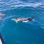 Photo of Dolphin Safari