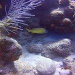La réserve Cousteau