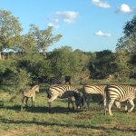 Foto di Simbambili Game Lodge