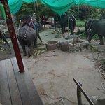 Photo of KokChang Safari Elephant Trekking