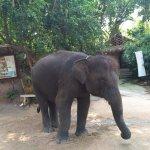 Photo of Pattaya Elephant Village