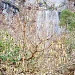 Árbol tapando cascada