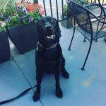 Dog friendly outside patio.