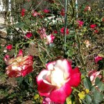 Photo de Florida Botanical Gardens