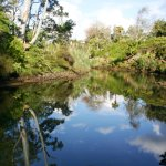 Tranquil river side provides prime views for our accommodation and special glamping Tents and un