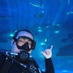 Shark dive is a must do!