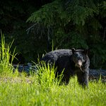 Wildlife in Whistler Photo by Mike Crane