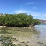 Photo de Playa Las Gatas