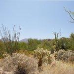 Photo of The Westin Desert Willow Villas