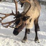 Foto de Running Reindeer Ranch