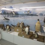 Part of the Antartic display