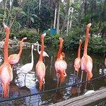 Photo de Flamingo Gardens