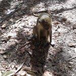 Bijilo Forest Park Foto